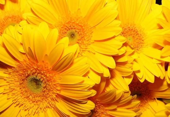 de flores amarillas